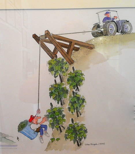 Tending the vineyards comes with its challenges! (Cartoon in Selbach tasting room)