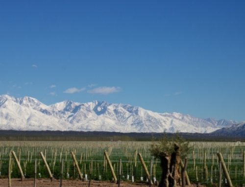 6 Good Value Wines to Celebrate Malbec World Day