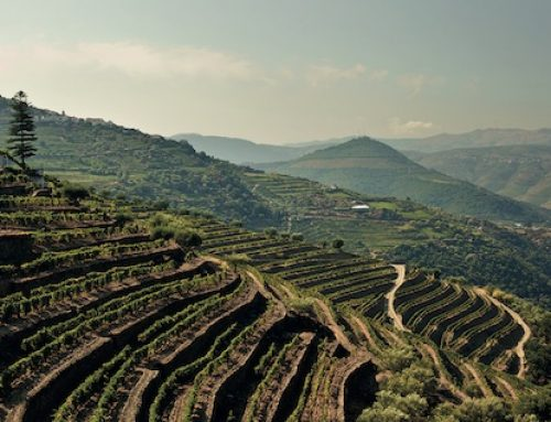 5 Good Reasons to Re-think (and Drink) Portugal
