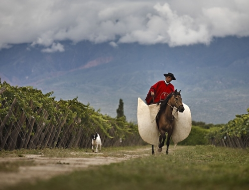 Argentina: Work Horse Wines Deliver Value